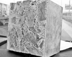 stein1